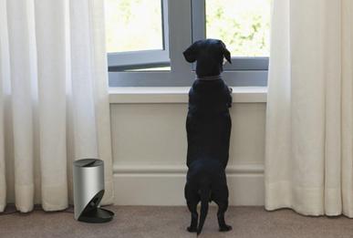 寵物防吠訓練器設計,行業洞察下的設計探索