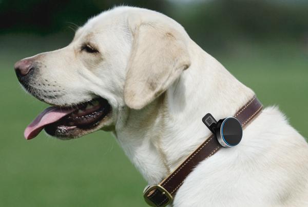 寵物智能穿戴設備設計,創新科技擁抱萌寵生活