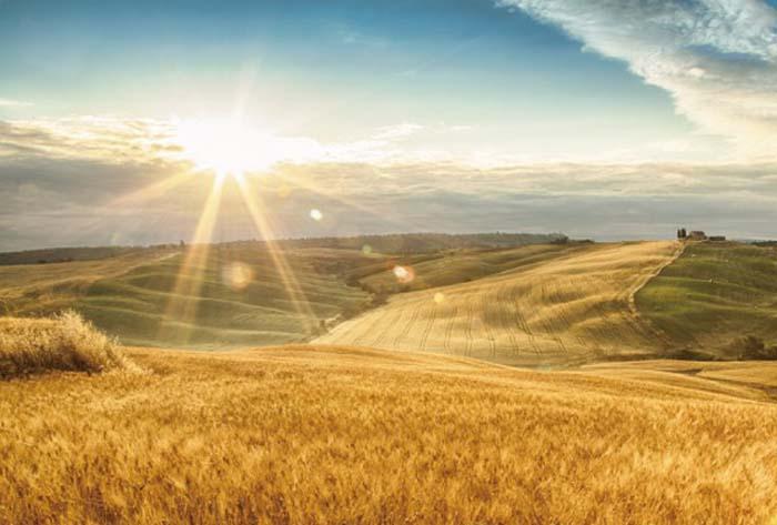智慧農業品牌戰略設計,為向陽坡開發品牌戰略